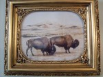 Image of Buffalo, like those seen by Robert Campbell